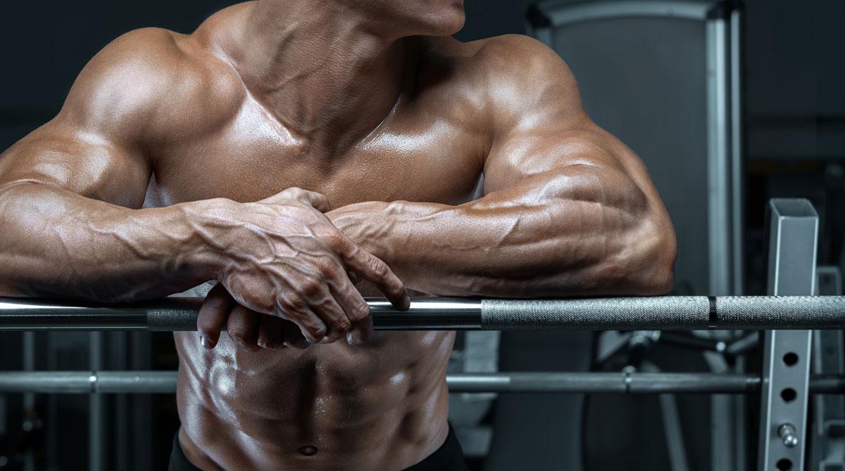 Développement de la masse musculaire