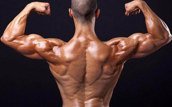 Anatomie Muskel - Wie deine Muskeln aufgebaut sind